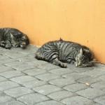 cats-403254_1920.jpg